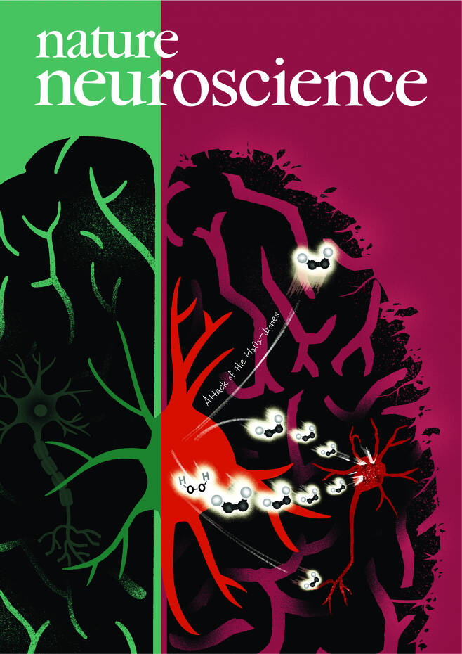 이번 연구성과가 게재된 국제학술지 '네이처 뉴로사이언스' 표지.[IBS 제공]