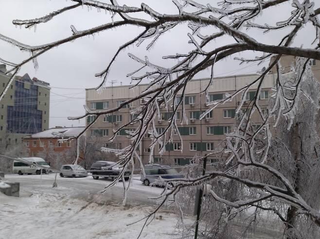 얼음이 나뭇가지에 달라붙어 있는 모습. [연합뉴스 김형우 촬영]