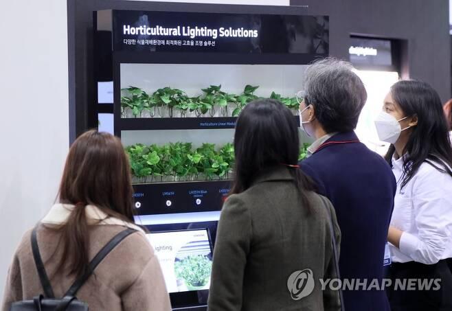 식물재배도 LED 조명활용 [연합뉴스 자료사진]