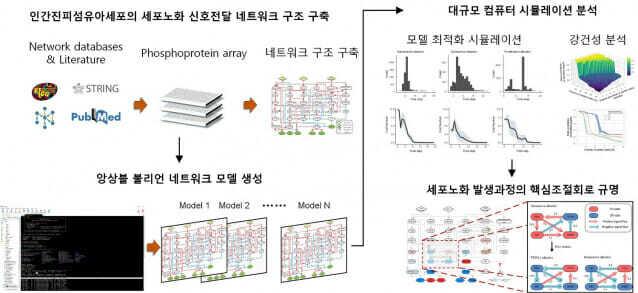 앙상블 불리언 네트워크 모델링 및 대규모 컴퓨터 시뮬레이션 분석