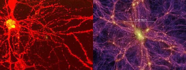 왼쪽은 마우스의 뇌 신경 네트워크, 오른쪽은 2005년 국제학술지 '네이처'에 발표된 가로·세로 20억광년 크기인 우주의 시뮬레이션 구조. 출처 http://www.visualcomplexity.com/vc/blog/?p=234
