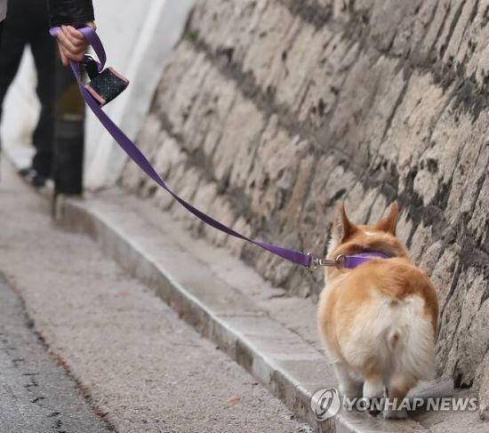 서울 중구의 한 거리에서 외국인이 반려견과 함께 산책하고 있다. 사진은 기사 중 특정표현과 무관함. 사진=연합뉴스
