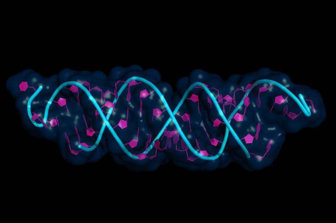 Cartoon model of small interfering RNA bound to a messenger RNA. (123rf)