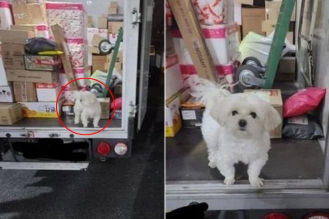 택배 트럭 짐칸에서 포착된 강아지. 온라인커뮤니티 캡처