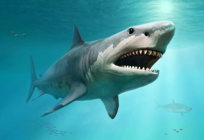 메갈로돈은 다른 상어와 마찬가지로 어미 배 속에서 부화했을 때 아직 부화하지 않은 알들을 포식한 것으로 추정된다.(사진=123rf)