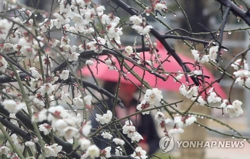 봄비 [연합뉴스 자료사진]