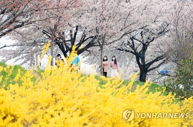 '봄이 피다' [연합뉴스 자료사진]