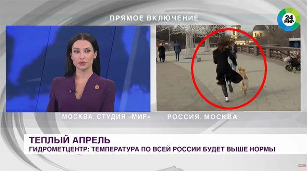 1일 미르24(Мир24) 뉴스 생중계 현장에 난입한 대형견이 기자 마이크를 빼앗아 달아나는 방송사고가 났다.