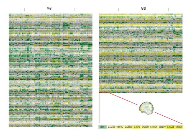 남자 112명, 여자 169명의 두뇌를 분석해 색으로 표현한 모자이크. 각 행이 두뇌 1개를 나타낸다. 각 열은 전체 두뇌 영역 116개 중 한 영역의 부피를 의미한다. 부피는 초록색일수록 크고 하얀색은 중간이며 노란색일수록 작다. 두 집단의 차이는 쉽게 볼 수 있다. 여성(왼쪽)이 초록색에 가깝고 남성(오른쪽)은 노란색을 띤다. 그러나 개인의 두뇌가 전부 초록색이거나 노란색인 경우는 없다. 한빛비즈 제공