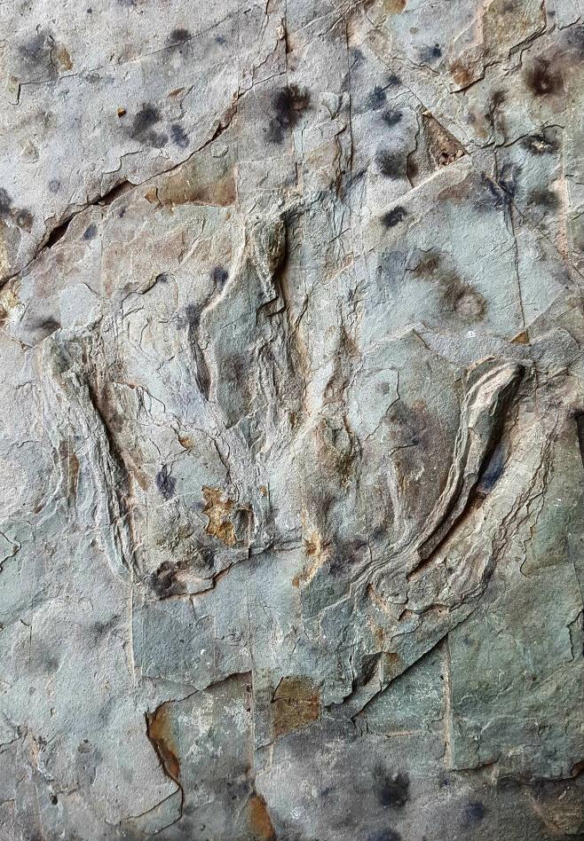 반구천 일원에 남아있는 공룡발자국