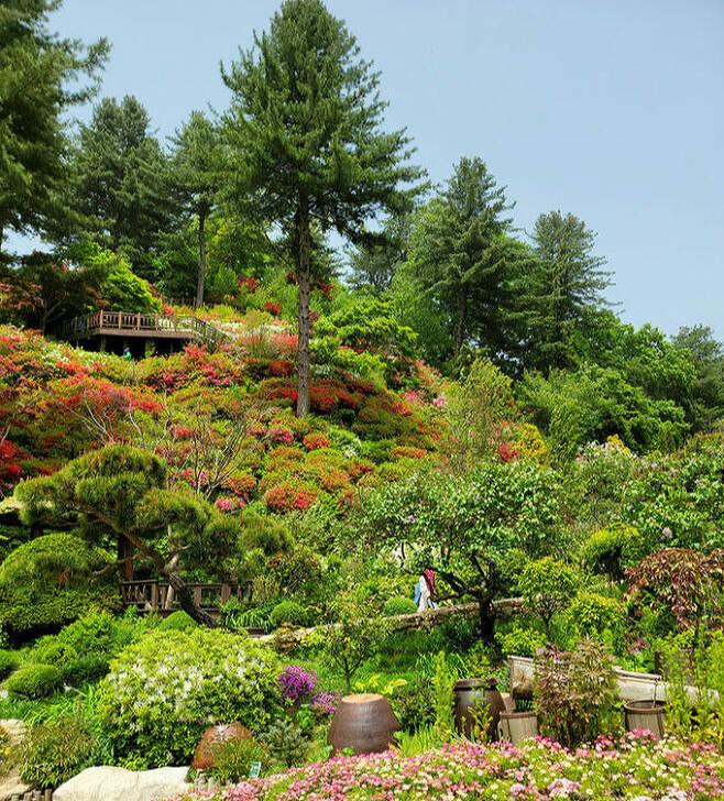고향집 정원