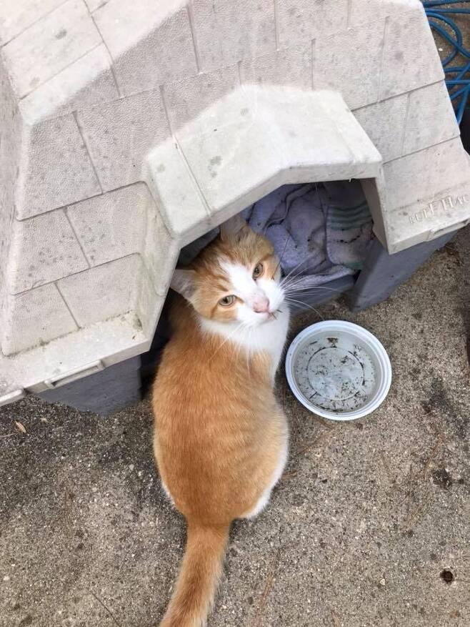 출처: Pirate Cat