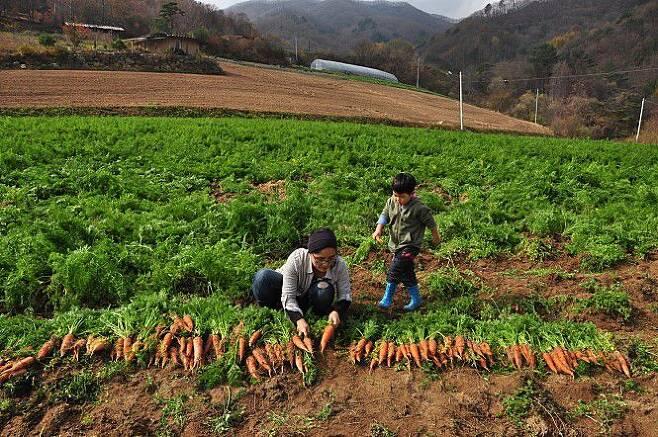 출처: 황윤 감독과 아들 도영 군이 유기농 당근을 돌보고 있다. 영화 '잡식가족의 딜레마' 스틸