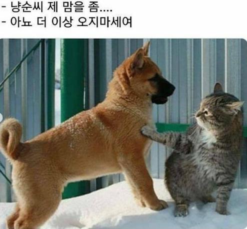 출처: https://www.instagram.com/p/CKYEdtylQNj/?utm_source=ig_web_copy_link