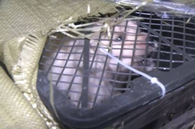 출처: https://www.scmp.com/news/asia/article/3132676/pet-mystery-box-chinas-dog-and-cat-mail-order-craze-causes-new-outrage