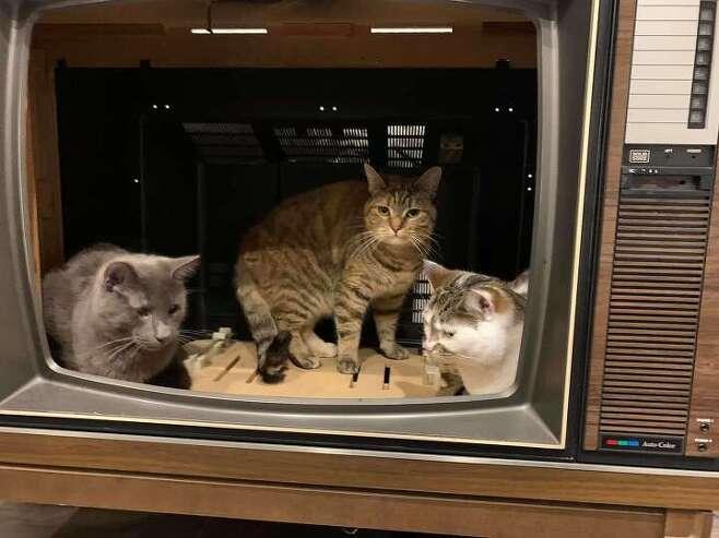 출처: https://www.thedodo.com/close-to-home/familys-house-is-one-big-cat-playground
