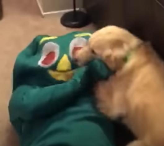 출처: https://wamiz.com/chiens/actu/bonbons-sort-halloween-chiens-laissent-choix-video-jour-8881.html