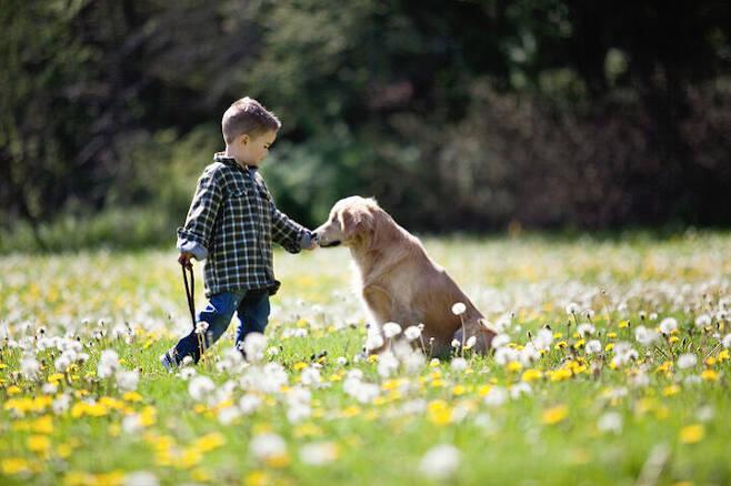 출처: https://wamiz.com/chiens/actu/smiley-le-golden-retriever-sans-yeux-devenu-chien-de-therapie-6120.html