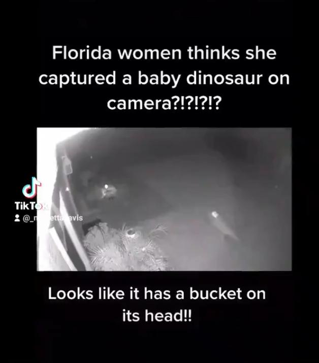 올 초 자택 마당에서 아기 공룡을 봤다는 한 미국 여성이 여전히 이를 사실이라 믿는 것으로 알려졌다. /사진=틱톡