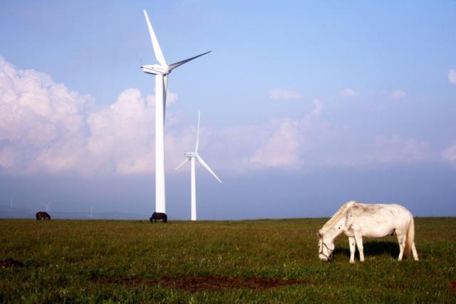 공중초원 호텔 근처 풍력발전기와 풀을 뜯고 있는 말. ⓒ최종명
