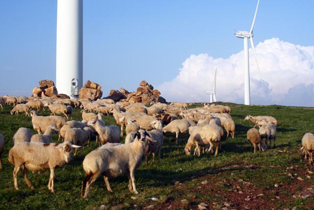 공중초원 호텔 근처 풍력발전기와 양떼. ⓒ최종명