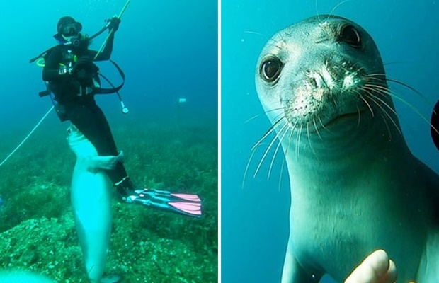 그리스 알로니소스섬 해안에서 무참히 죽은 채 발견된 물범 '코스티스'의 생전 마지막 모습이 공개됐다. 지난달 31일 데일리메일은 코스티스가 끔찍한 사체로 발견되기 2주 전 촬영된 영상을 입수해 공개했다.