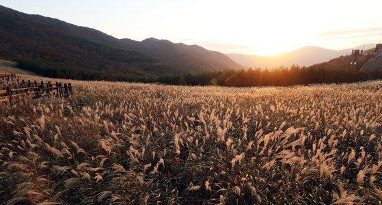 간월재의 10월 풍경. [사진 울주군]