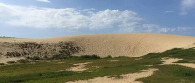 신두리 해안사구. 세계 최대 모래언덕이자 독특한 생태 관광지로 수많은 관광객이 찾고 있다. 사진=태안군.