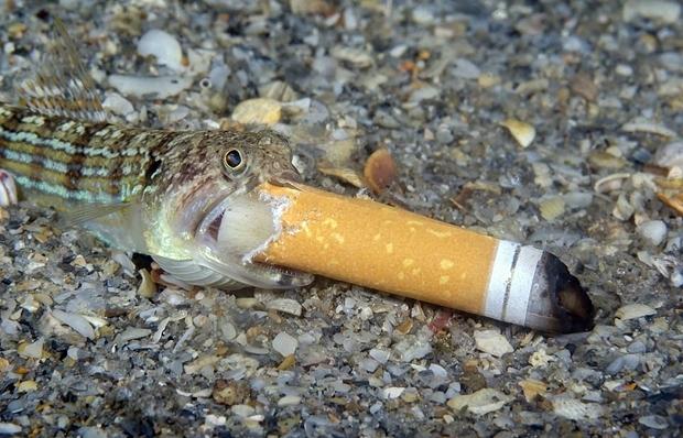 캐나다 출신 스티븐 코박스의 작품 역시 바다 쓰레기 문제에 경종을 울렸다. 작가는 미국 플로리다주 해안에서 담배꽁초를 집어삼키는 매퉁이 한 마리를 촬영했다고 밝혔다.