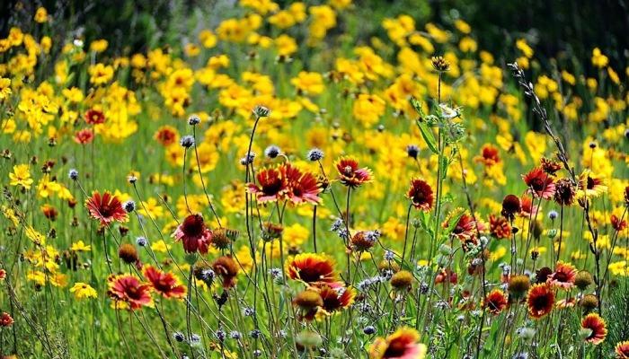 [포토친구] 초여름 들판의 꽃